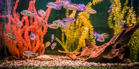 A green beautiful planted tropical freshwater aquarium with fishes Stock Photo - 22260670