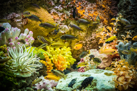 A green beautiful planted tropical freshwater aquarium with fishes Stock Photo - 22260671