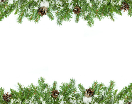 firs: Christmas background with snow, and cones isolated on white