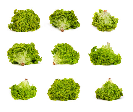 set of Fresh Green Lettuce isolated on a white background photo