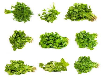 set of Fresh branches of green dill and Parsley tied isolated on white background. photo