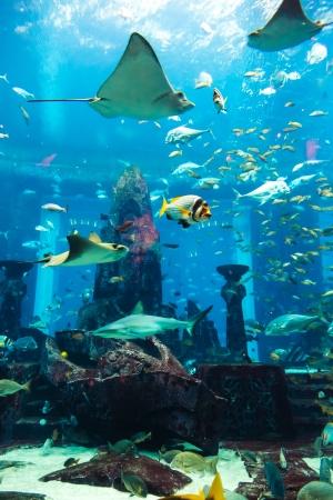 Fotografie z tropické ryby na korálovém útesu v Dubaji akváriu Reklamní fotografie