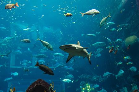 pez pecera: Foto de un pez tropical de un arrecife de coral en el acuario de Dubai Foto de archivo