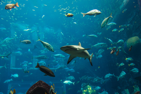 school of fish: Photo of a tropical fish on a coral reef in Dubai aquarium Stock Photo