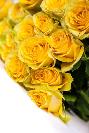 Group of fresh yellow roses isolated on a white background photo