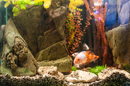 A green beautiful planted tropical freshwater aquarium with fishes Stock Photo - 25972739