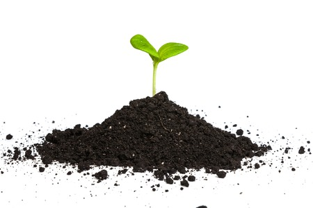 dirt: Heap dirt with a green plant sprout isolated on white background