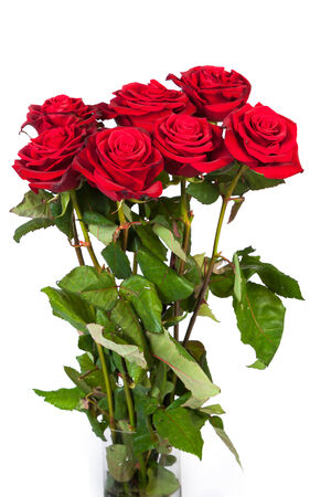 Three fresh red roses isolated on a white background photo