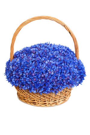 Beautiful blue cornflowers in a basket isolated on white background photo