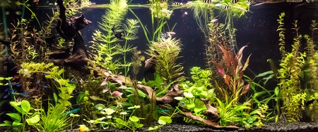 A green beautiful planted tropical freshwater aquarium with fishes Stock Photo - 26886440