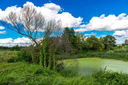Green trees by the lake on a sunny day, with clouds on the sky photo