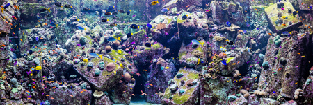 live coral: tropical fish on a coral reef