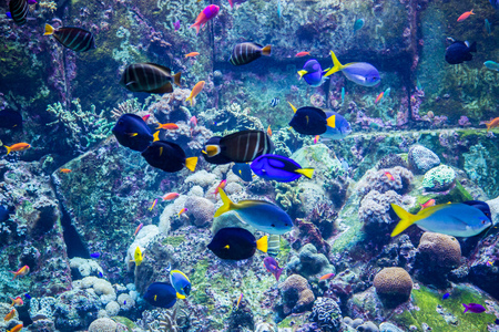 reefscape: tropical fish on a coral reef