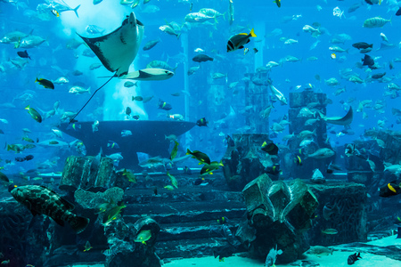 reefscape: tropical fish on a coral reef. Stingray fish