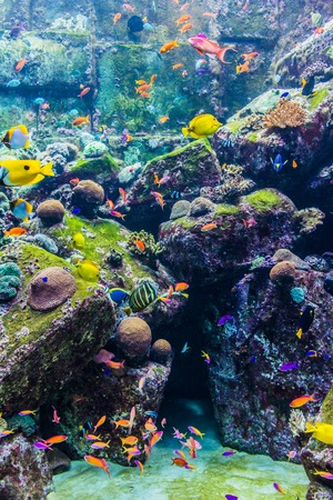 tropical fish on a coral reef  photo