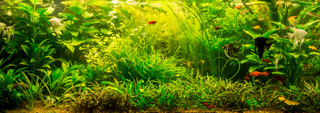 A green beautiful planted tropical freshwater aquarium with fishes Banco de Imagens