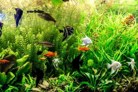 緑美しい植えられた熱帯淡水のアクアリウムの魚と