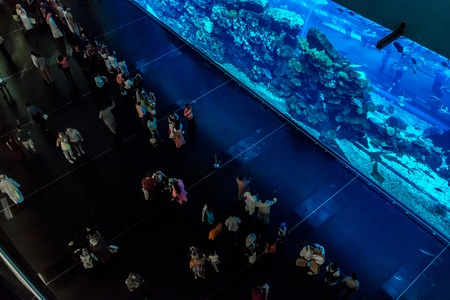 DUBAI, UAE - NOVEMBER 14: Aquarium in Dubai Mall - worlds largest shopping mall , Downtown Burj Dubai November 14, 2012 in Dubai, United Arab Emirates