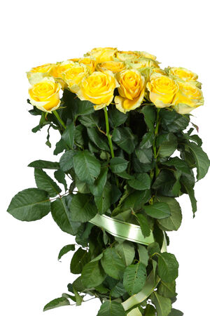 Group of fresh yellow roses isolated on a white  photo