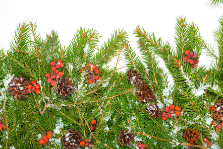 hollyberry: Christmas background with snow, cones and holly berry isolated on white