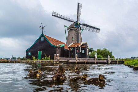 wind mills: Wind mills and ducks in Zaanse Schans, Netherland. Holland Stock Photo