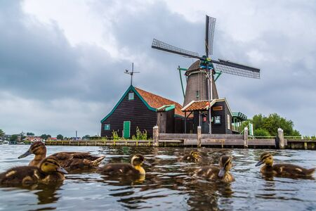 zaanse: Wind mills and ducks in Zaanse Schans, Netherland. Holland Stock Photo
