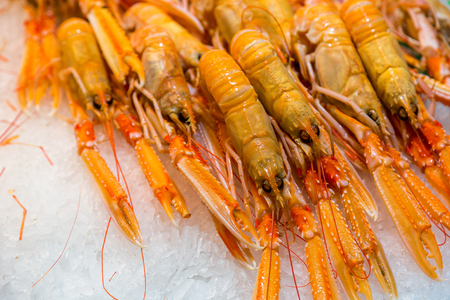 Fresh red lobsters on ice  in a store photo