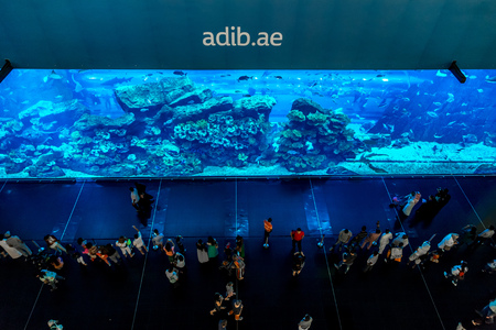 mall of the emirates: DUBAI, UAE - NOVEMBER 14: Aquarium in Dubai Mall - worlds largest shopping mall , Downtown Burj Dubai November 14, 2012 in Dubai, United Arab Emirates