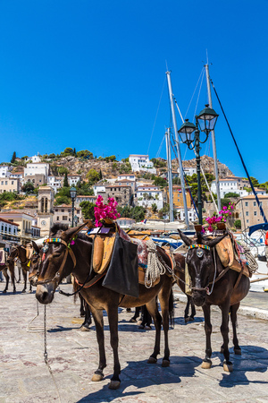 burro: Burros en la isla de Hydra en un día de verano en Grecia