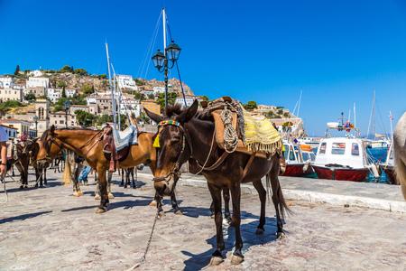 burro: Burros en la isla de Hydra en un d�a de verano en Grecia
