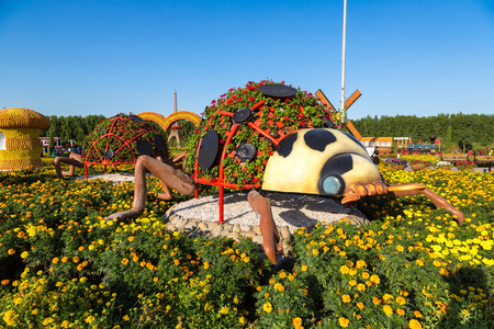 lady cow: DUBAI, UAE - NOVEMBER 24 : Dubai miracle garden with over 45 million flowers in a sunny day on November 24, 2015, United Arab Emirates Editorial