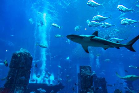 red coral colony: DUBAI, UAE - DECEMBER 5: Large aquarium in Hotel Atlantis in Dubai, UAE. December 5, 2015 in Dubai, United Arab Emirates Editorial