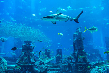 reefscape: DUBAI, UAE - DECEMBER 5: Large aquarium in Hotel Atlantis in Dubai, UAE. December 5, 2015 in Dubai, United Arab Emirates Editorial