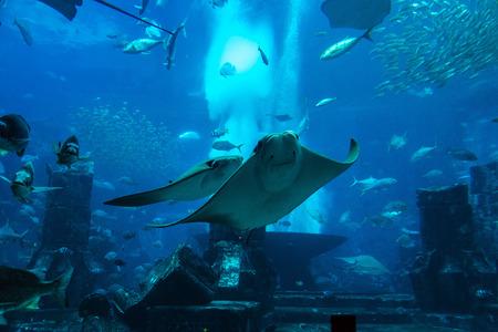 reefscape: Large aquarium and many fish in Dubai, UAE. Stock Photo