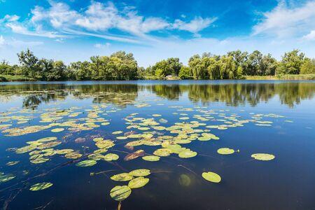 plantes de bassin et l'eau calme dans une belle journée d'été Banque d'images