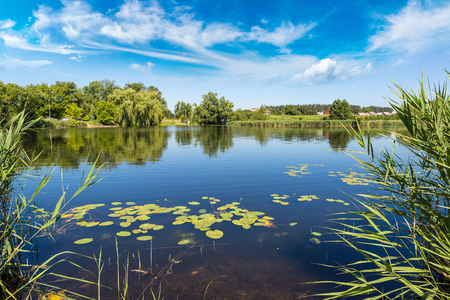 water plants: Calm pond and water plants in a beautiful summer day Stock Photo