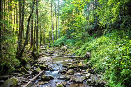 The mountain river  in Yaremche, Carpathians, Ukraine
