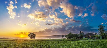 grass beautiful: Morning countryside landscape. Beautiful sunrise over garden in a summer morning
