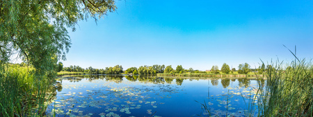 Calm pond and water plants in a beautiful summer day Stock Photo