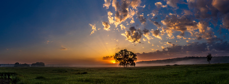 grass beautiful: Beautiful sunrise over green field and single tree in a summer morning