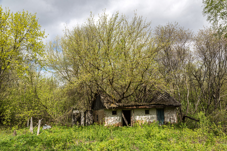 chernobyl: Abandoned village in Chernobyl, Ukraine in a summer day