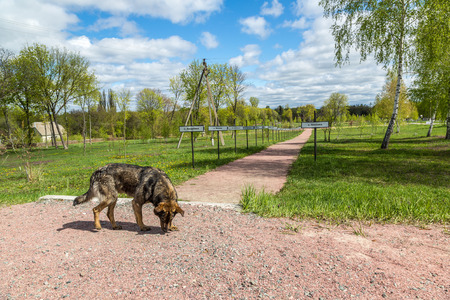 chernobyl: Memorial of nuclear disaster in Chernobyl city and a wild dog, Ukraine in a summer day Stock Photo