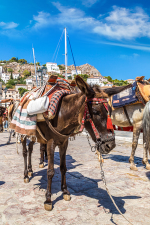 house donkey: Donkeys at the Hydra island  in a summer day in Greece
