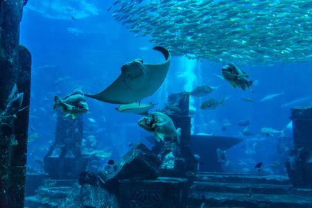 reefscape: Large aquarium in Dubai, United Arab Emirates