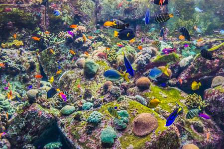 red coral colony: Photo of a tropical fish on a coral reef in Dubai aquarium Stock Photo