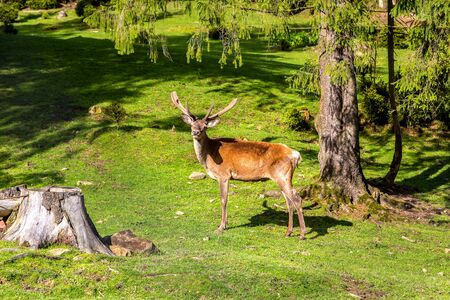 Wild deer in a forest in a beautiful summer day Stock Photo