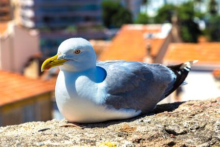 Seagull on a wall in Cannes in a beautiful summer day, France