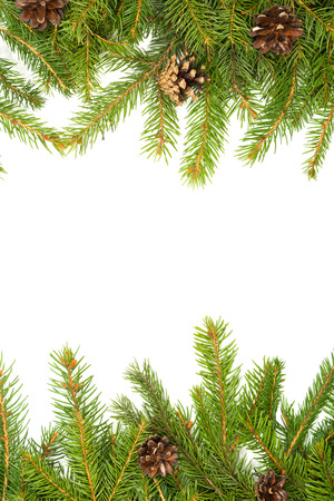Kerst achtergrond met kegels op wit wordt geïsoleerd