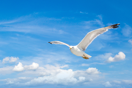 Big seagull in clear sky in a summer day