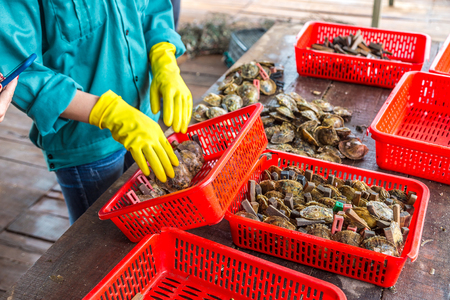 Pearl implantation at Pearl farm in Halong bay, Vietnam in a summer day Stock Photo